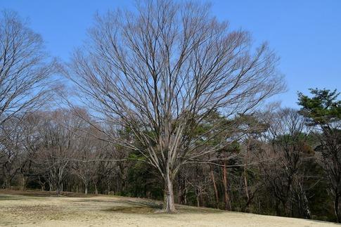 2018-03-11  B-Resized  国営武蔵丘陵森林公園(梅園)‥ (10).jpg