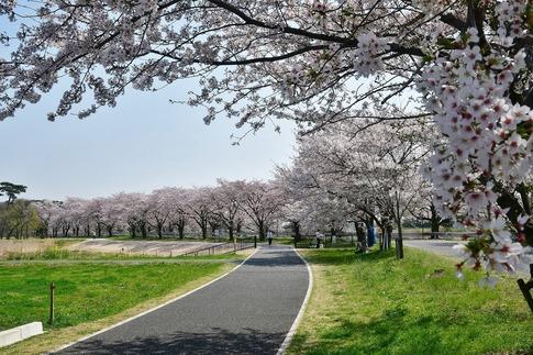 2018-04-01  A-Resized  多々良沼公園‥(群馬県邑楽町)‥ (1).jpg