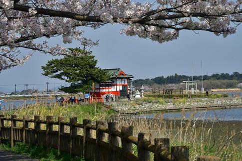 2018-04-01  C-Resized  多々良沼公園‥(群馬県邑楽町)‥ (3).jpg