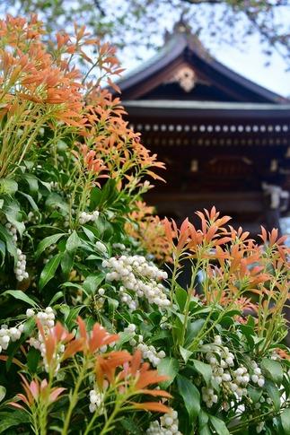 2018-04-08  Resized  十連寺の花まつり‥ (1).jpg