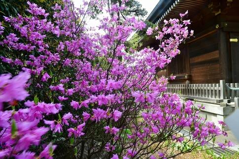 2018-04-08  Resized  十連寺の花まつり‥ (18).jpg