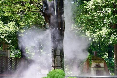 2018-07-29  B-Resized  真夏の武蔵丘陵森林公園‥ (1).jpg