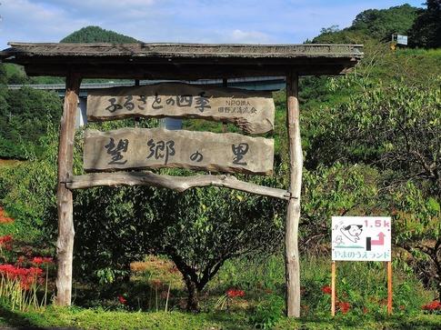 2018-09-22  Resized  秩父郡皆野町下田野のヒガンバナ‥ (6).jpg