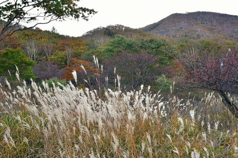 2018-10-07  Resized  赤城山(覚満淵)‥ (9).jpg