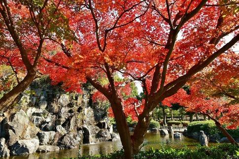 2018-11-25  B-Resized  丸山公園‥ (13).jpg