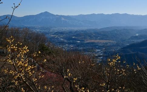 2019-02-02  A-Resized  長瀞宝登山(ロウバイ園)‥ (2).jpg