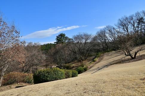 2019-02-16  B-Resized  早春の武蔵丘陵森林公園(南口)‥ (13).jpg