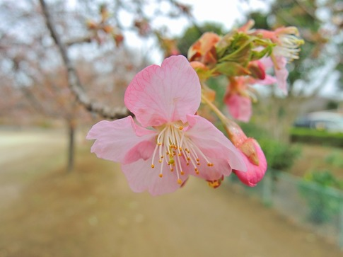 2019-03-10  Resized  上尾丸山公園‥ (7).jpg