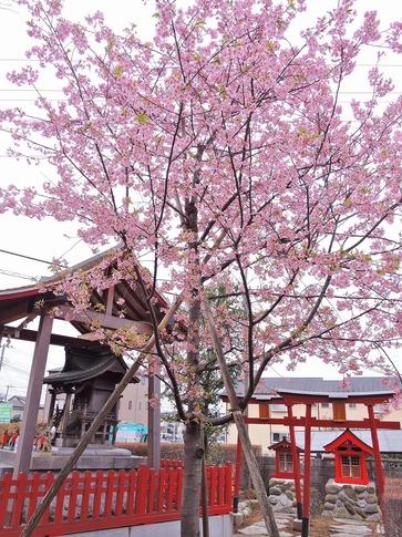 2019-03-10  Resized  昌福寺(上尾市)‥ (1).jpg