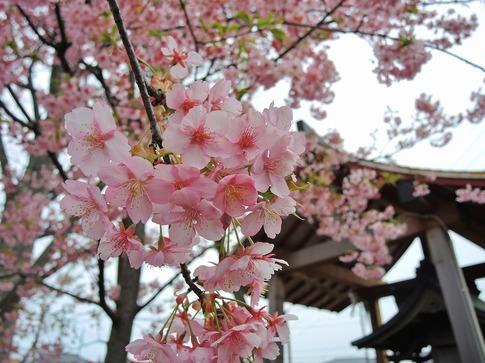2019-03-10  Resized  昌福寺(上尾市)‥ (2).jpg