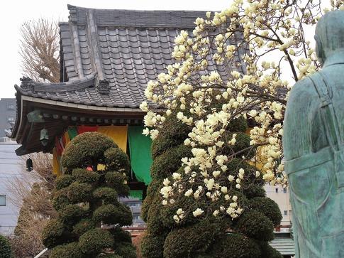 2019-03-16  B-Resized  上尾遍照院‥ (2).jpg