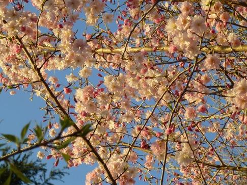 2019-04-04  Resized  上野公園‥ (5).jpg
