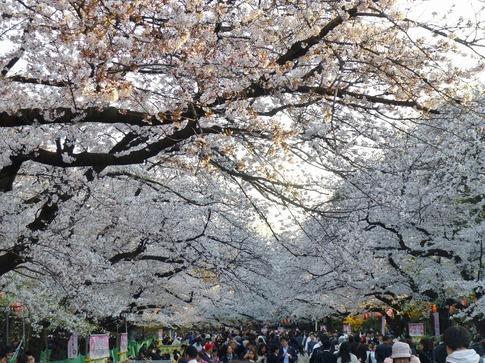 2019-04-04  Resized  上野公園‥ (9).jpg