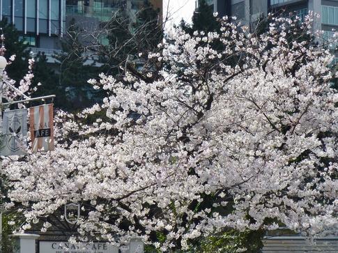2019-04-05  Resized  飯田橋外堀‥ (11).jpg