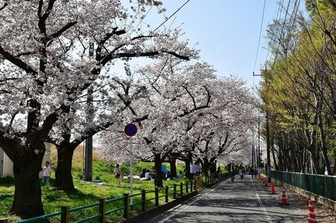 2019-04-06  A-Resized  熊谷市(桜堤)‥ (17).jpg