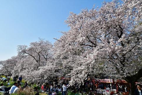 2019-04-06  B-Resized  熊谷市(桜堤)‥ (12).jpg