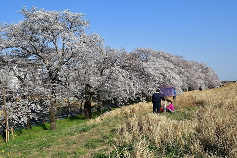 2019-04-06  B-Resized  熊谷市(桜堤)‥ (20).jpg