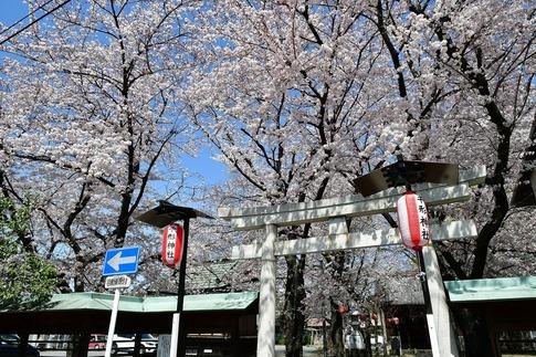 2019-04-06  Resized  熊谷市(千形神社)‥ (1).jpg