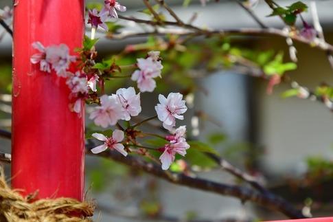 2019-04-06  Resized  熊谷市(奴稲荷神社)‥ (2).jpg