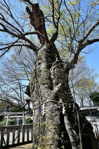 2019-04-06  Resized  熊谷市(高城神社)‥ (1).jpg