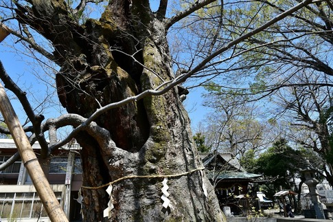 2019-04-06  Resized  熊谷市(高城神社)‥ (4).jpg