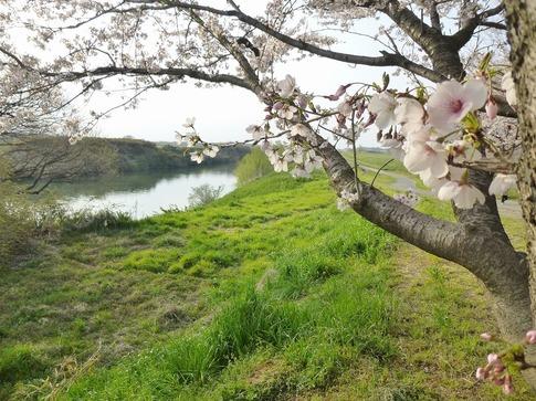 2019-04-07  Resized  上尾榎本牧場‥ (5).jpg