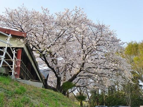 2019-04-07  Resized  上尾榎本牧場‥ (7).jpg