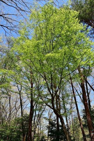2019-04-13  A-Resized  武蔵丘陵森林公園‥ (3).jpg
