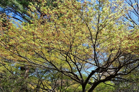 2019-04-13  B-Resized  武蔵丘陵森林公園‥ (14).jpg