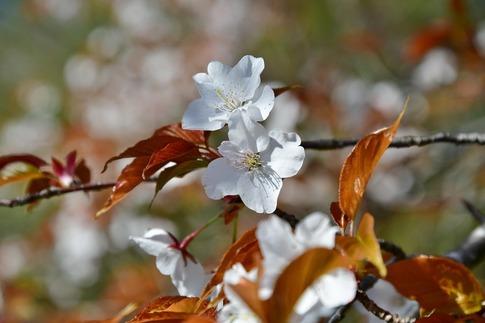 2019-04-13  Resized  武蔵丘陵森林公園‥ (4).jpg