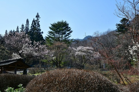 2019-04-20  A-Resized  古峯園(鹿沼市草久)‥ (5).jpg