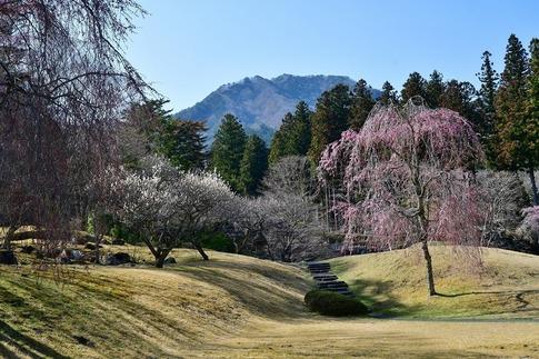 2019-04-20  A-Resized  古峯園(鹿沼市草久)‥ (9).jpg