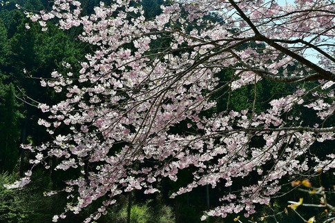 2019-04-20  A-Resized  鹿沼市草久‥ (5).jpg