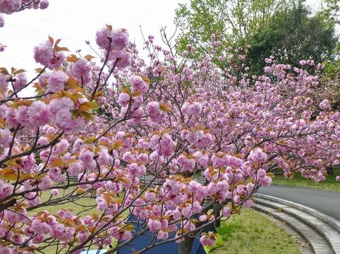 2019-04-21  Resized  平成の森公園‥ (1).jpg