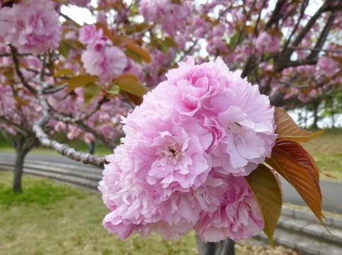 2019-04-21  Resized  平成の森公園‥ (2).jpg