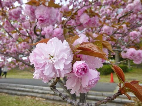 2019-04-21  Resized  平成の森公園‥ (3).jpg