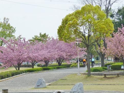 2019-04-21  Resized  平成の森公園‥ (4).jpg