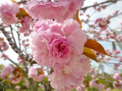 2019-04-21  Resized  平成の森公園‥ (5).jpg