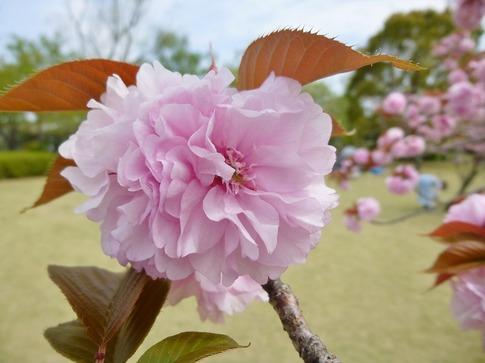 2019-04-21  Resized  平成の森公園‥ (6).jpg