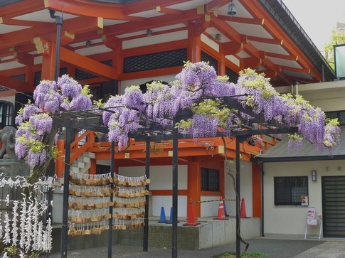 2019-04-23  Resized  神楽坂(毘沙門天)‥ (1).jpg