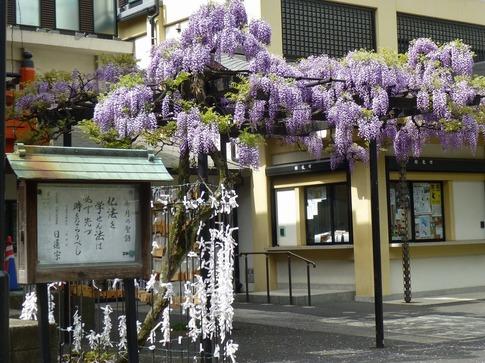 2019-04-23  Resized  神楽坂(毘沙門天)‥ (4).jpg