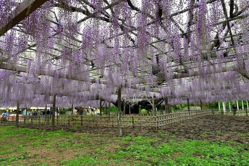 2019-04-27  A-Resized  玉敷神社‥ (3).jpg