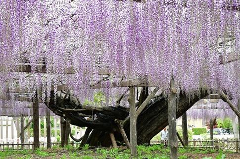2019-04-27  A-Resized  玉敷神社‥ (7).jpg