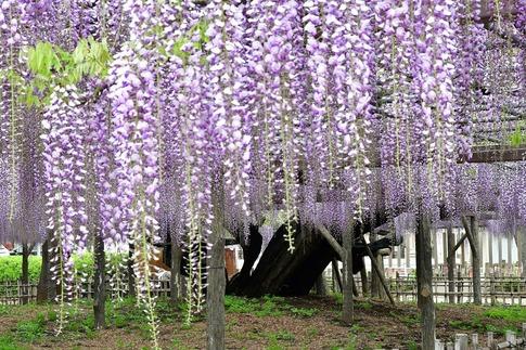 2019-04-27  A-Resized  玉敷神社‥ (8).jpg