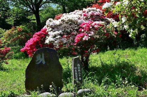 2019-04-28  A-Resized  五大尊のツツジ(越生町)‥ (12).jpg