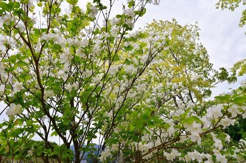 2019-05-18  Resized  高山ふれあいパーク‥ (13).jpg