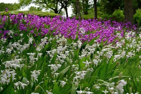 2019-05-19  A-Resized  平成の森公園(埼玉県比企郡川島町)‥ (2).jpg