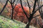 A-Resized 桜山(冬桜) (11).jpg