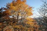 A-Resized 桜山(冬桜) (13).jpg