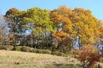 A-Resized 桜山(冬桜) (9).jpg
